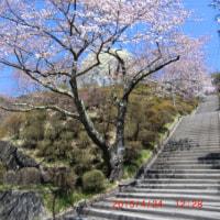 尾玉日記(咲き比べ3)