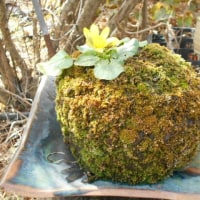平成29年「草もの盆栽を楽しむ会」の総会