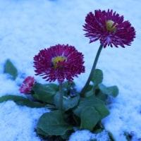 雪が降ったよ~ ☆