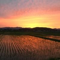 水田 + 山 + 夕焼け = 無限の輝き
