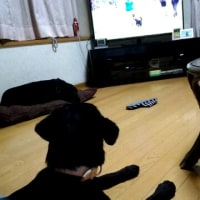 FCI WC Obedience 2017 お勉強