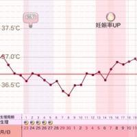 D31 高温期16日目