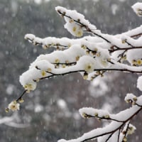 たのしい万葉集 梅の花それとも見えず降る雪の・・・