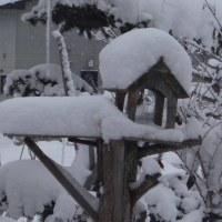 積雪34センチ  融雪槽   除雪