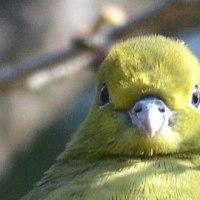 鳥を呼ぶ母ちゃんパワー健在