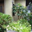 朝涼しいうちに庭の草むしりや植木の剪定をする!