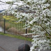 うれしい春の日和