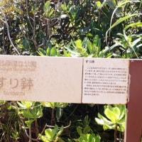 南崎小富士まで片道3キロくらい