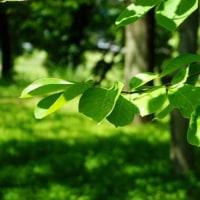 武蔵野公園の緑を眺めて その3