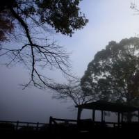 ~~~  濃霧・・・ ~~~