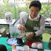 279煎 久喜市民祭りにて番茶の呈茶