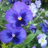 夏のお花が真っ盛り…