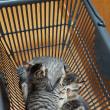 買い物籠の三匹達