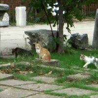 トルコ一周とカッパドキアの旅