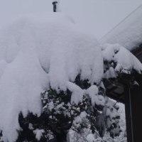 寒波来襲で70cm以上の積雪だ