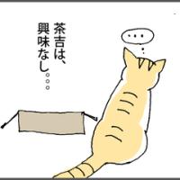 空き箱、猫、犬