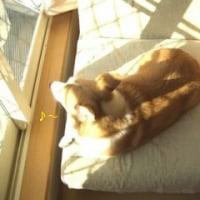 ソファーだいすきむーちゃん。