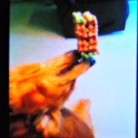 5/26 ご主人は13段までおやつを積んだ すごい協力的な犬 食べていいよ
