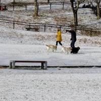今シーズン初の雪化粧でした!