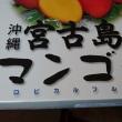 宮古島のマンゴー(#^.^#)