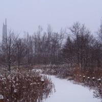 雪降る・野幌森林公園