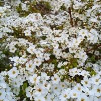 花とハナッコ