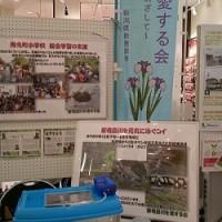 エコカーニバル2016in新発田