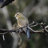 ● ゆったりと春の日・・・鳥撮り