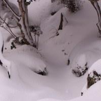 雪と遊んで(^^♪
