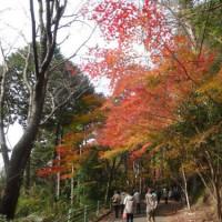 鳳来寺山紅葉祭りバス旅行!