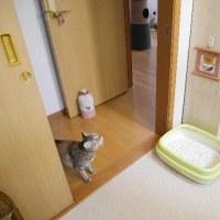 またトイレ(`艸´;)【動画】