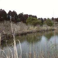2017年3月18日(土) 水郷&ハスの池