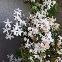 ベランダの鉢花の模様替えを少し