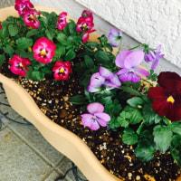 片隅に咲くお花