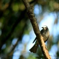 冬鳥を撮る