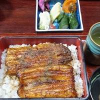 美味しい鰻食べたかった‼