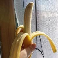 再びバナナ一房 (今度はこの大きさで驚きの値段!)