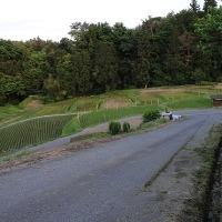 ことしの草刈り