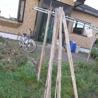 竹の支柱を綺麗に洗いました~