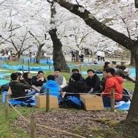 落城の悲劇を秘めて古城の桜咲き誇る