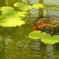 神代植物公園:1