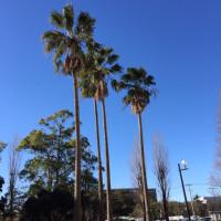 澄み渡った空。南国にいるようです。風が強く寒いです。