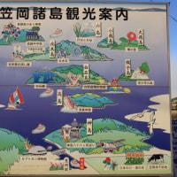 六島の水仙