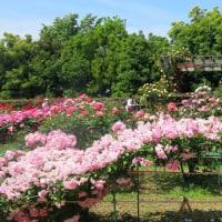 花旅 平塚市 花菜ガーデン