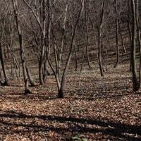 カタクリの咲く雑木林