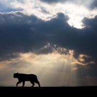 天使のハシゴから猫神様が降臨したようなイメージ @相島のネコたち