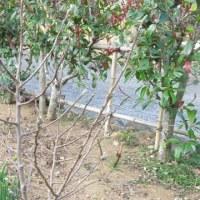 春分 旧暦と庭作り