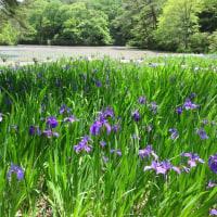神戸市森林植物園へ