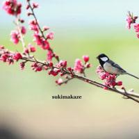 畑の鳥達 6