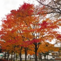 福井ひまわり公園の紅葉・黄葉!